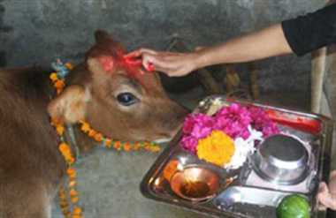 Cow, Declared, National Animal, High Court, Rajasthan