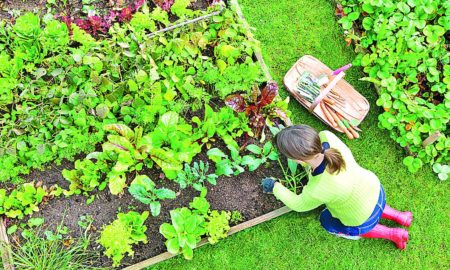 Vegetable Garden, Prepare, Hindi Article