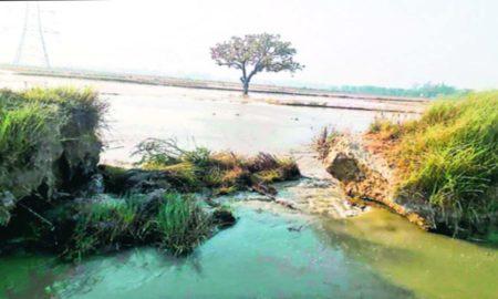 Flood, Bathinda, Breakdown, Rajbah, Dera Sucha Sauda, Help, Punjab