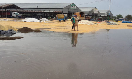 Bad, Maize, Rainwater, Management, Loss, Punjab