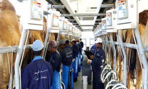 Milk Market, Camel Milk, Fat, Quality, Challenge