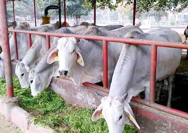 Opposed, Central Govt, Notification, Meghalaya, Economy, Ban