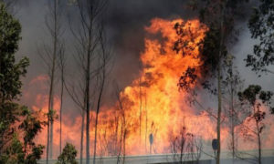 Portuguese Forest, Global Warming, Fire, Death, Injured