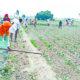 Dera Sacha Sauda, Followers, Kheta Singh, Agriculture, Gurmeet Ram Rahim