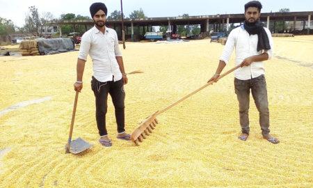 Heavy Rain, Abohar, Farmers, Crop, Traffic, Punjab