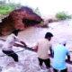 Canal, Paddy Crop, Dera Sacha Sauda Followers, Welfare Work, Gurmeet Ram Rahim, Punjab