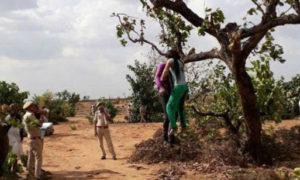 Couple, Hanging, Tree, Police, Rajasthan