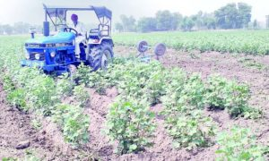 Fake, Seeds, Medicines, Farmer, Cotton Crop, Destroyed, Punjab