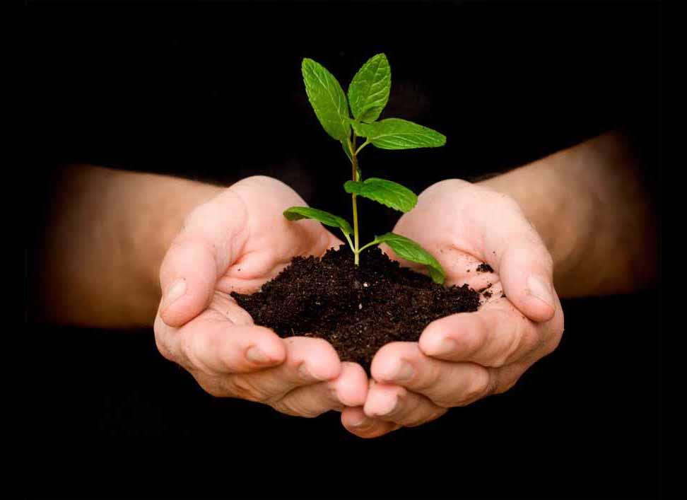 Hindi Article, World Population Day, Environment, Humanity, Dera Sacha Sauda, Gurmeet Ram Rahim
