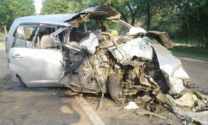 Vagabond Animal, Lives, Vehicle, Accident, Death, Injured, Punjab