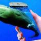 India, Future, Blue Whale, Game, Internet