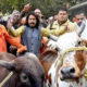 Attack Cow Vigilantes, Violence, India, US