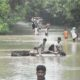 Bihar, Rivers, Boom, Katihar, Berndi, Flood, Died