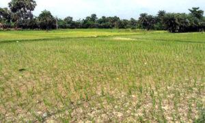 Worried, Theft, Canal Water, Farmer, Punjab