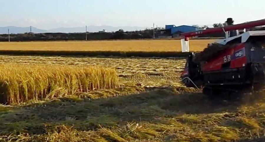 Parali Case, Entangled, India, Farmer, Crop