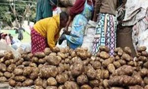 Increase, Prices, Potato, Low Yield, Relief, Farmer