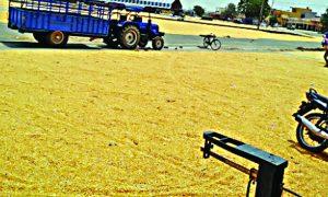 Mecca,Low Rate, Haryana, Farmer