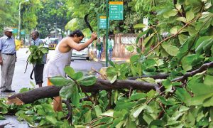 NGT, Banned, Tree, Cutting, SouthDelhi