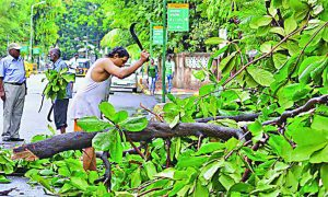 Saving, Trees, Delhi ,Artical
