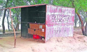 Tree Plantation Area, Covered, Liquor Shops, Punjab