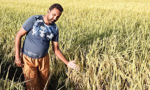 Jaspreet A Farmer Earning Profit After Destroying Parli