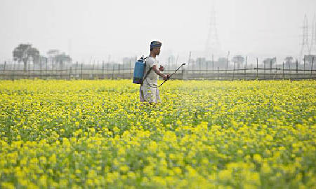 Crop Prices, Government, Hindi Editorial