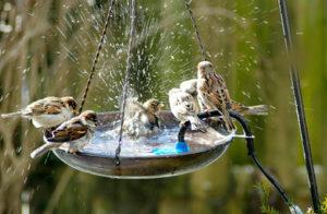 Rajasthan, Save Birds, Missing Birds Voices