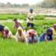 Rate, Workers, Rising, Inflation, Farmers, Laborer, Crop