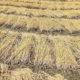 Food Grains, Decay, Farmers, Crop