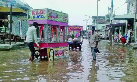 Rain, Sangat Mandi, Cotton Crop, Profit, Farmers