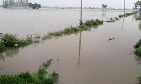 Paddy, Crop Wasted, Acres, Overflow Drain, Water, Punjab