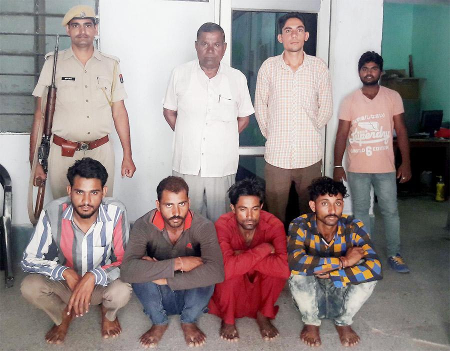 Rabbit, Deer, Hunting, Accused, Arrested, Crime