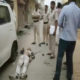 Murder, Young Man, Knife, Police, Haryana