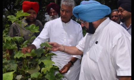 Captain Amarinder Singh, Crops, Compensation, Farmers, Punjab