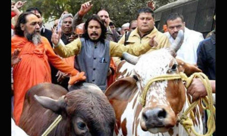 Attack Cow Vigilantes, Violence, India, US
