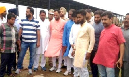 Cows, Died, Govt Cowshed, Raised, Punjab