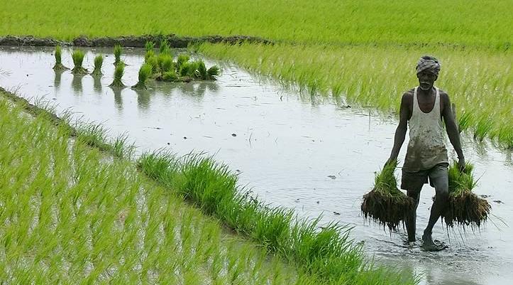 SVL Issue, Farmer, Supreme Court, Agriculture, Crop, Punjab