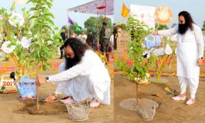 Mega Tree Plantation, Gurmeet Ram Rahim, Dera Sacha Sauda, Environment