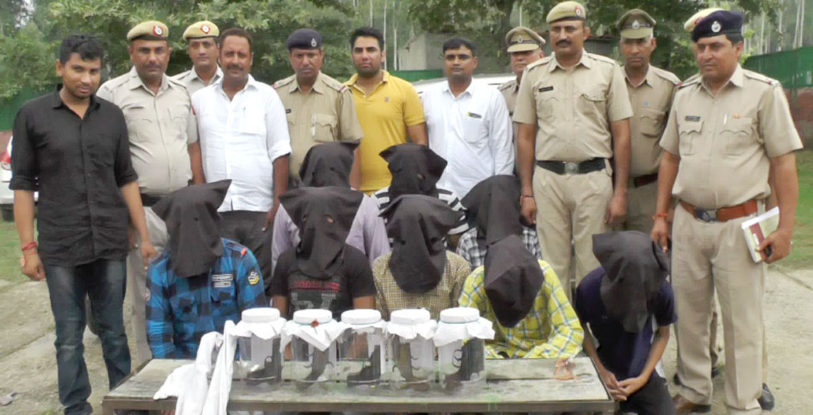 Robbers, Arrested, Police, Weapons, Haryana