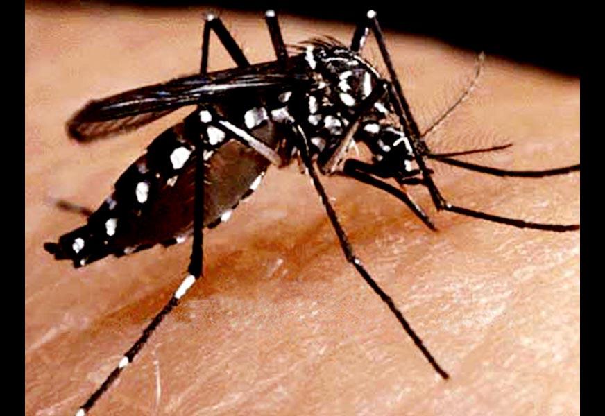 Prevent, Spread, Dengue, Fever, India