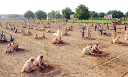 Dera Sacha Sauda, Precedence, Green Revolution, Gurmeet Ram Rahim