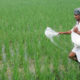 Farmers, Suffering, Badly, Agriculture, Crisis, India