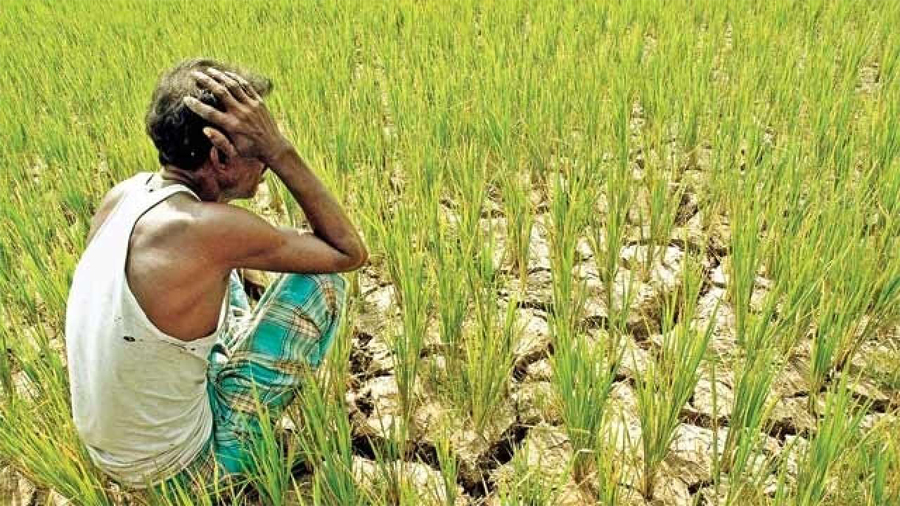 Challenge, Migrating, Agriculture, Farmer
