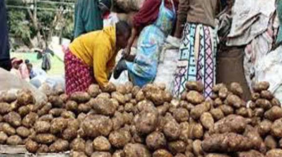 Increase, Prices, Potato, Low Yield, Relief, Farmer