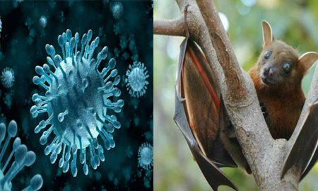 Dead. Bats, Himachal, Nipah, Virus