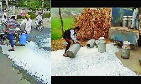 Frozen, food, Drinks, Farmers