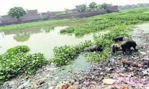 Heavy, municipal, corporation, Punjab, Bathinda