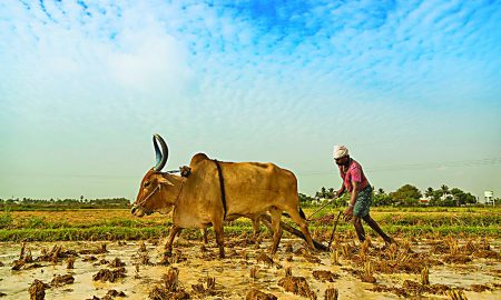 Do, Not, Really, Solve, Agriculture, Crisis