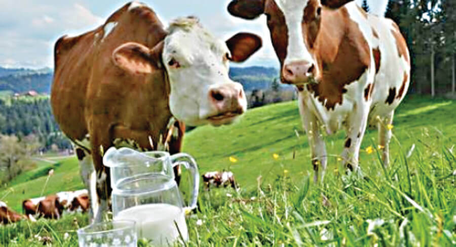 These, Treatments, Will, Give, More, Milk, Animals