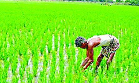 200 Paisa Per Quintal Increase In Paddy